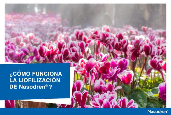 Nasodren es un extracto liofilizado de cyclamen europeaum